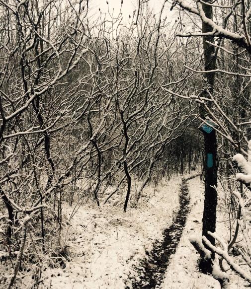 Bruce Trail, Ontario, local, appreciation, winter, Hockley Valley, running, outdoors