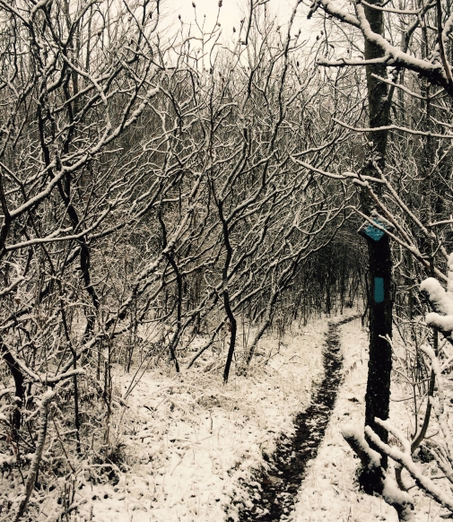 Bruce Trail, Ontario, local, appreciation, winter, Hockley Valley, running, outdoors