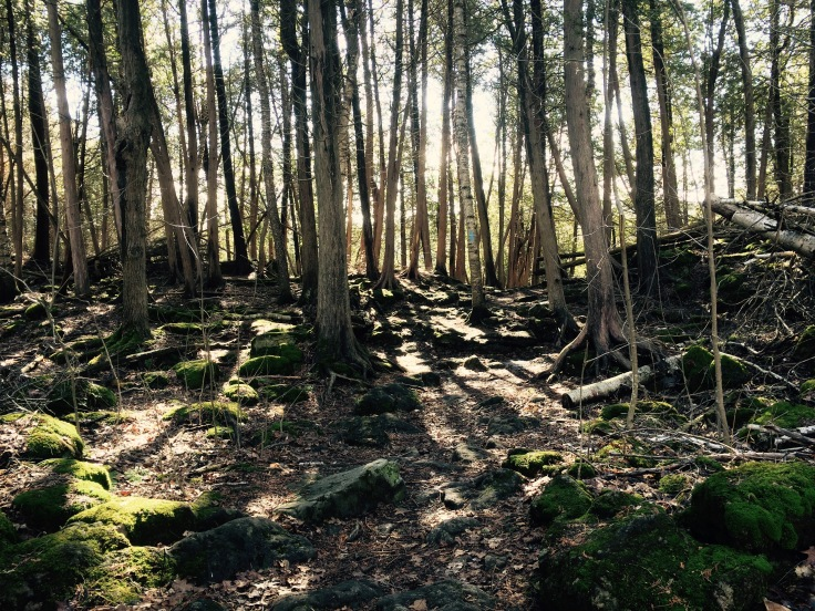 Hilton Falls, Conservation Area, Ontario, Forest, Bruce Trail