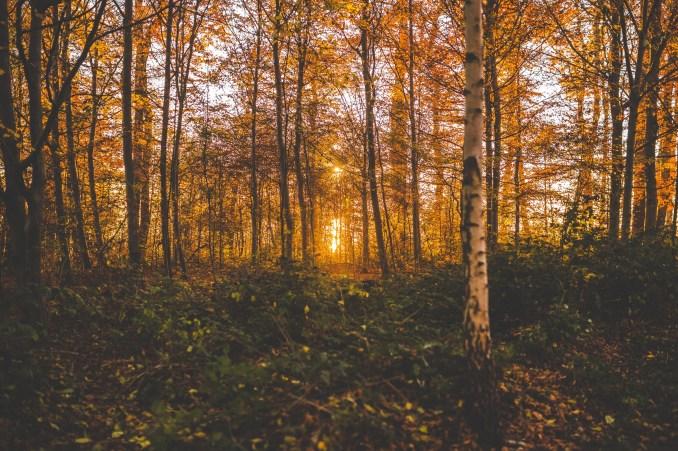 Sunrise, forest, trail running, trees, little moment